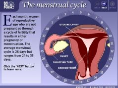 Download Dskp Sains Tingkatan 3 Baik Science Pt3 form 3 Menstrual Cycle