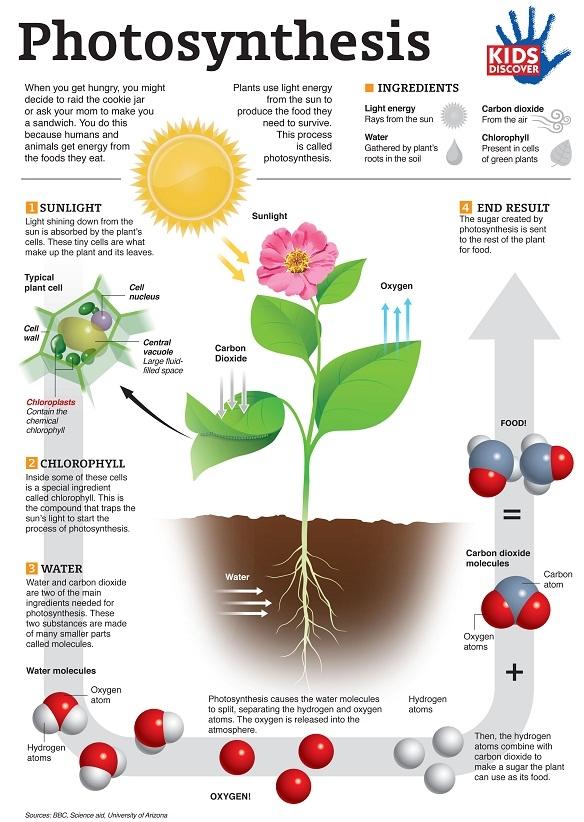 Latihan Biologi Tingkatan 4 Bermanfaat Fotosintesis Faktor Faktor Yang Diperlukan Dan Kepentingannya Of Senarai Latihan Biologi Tingkatan 4 Yang Power Khas Untuk Para Murid Dapatkan!