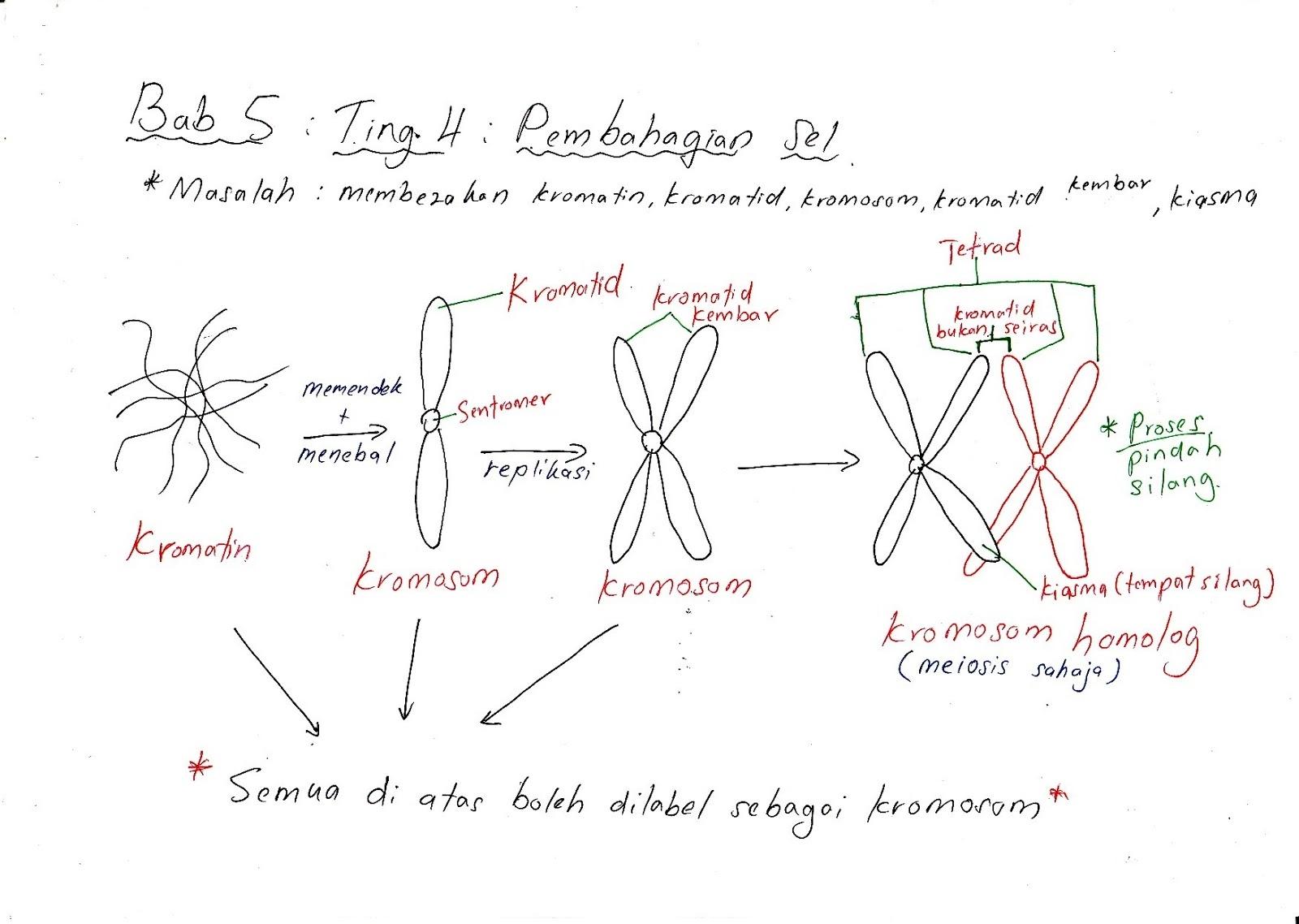 Nota Biologi Tingkatan 4 Yang Sangat Meletup Bijak Tekun Nota Kreatif Biologi Tingkatan 4 Bab 5 Of Himpunan Nota Biologi Tingkatan 4 Yang Terhebat Untuk Ibubapa Perolehi