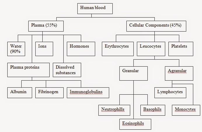 Nota Biologi Tingkatan 4 Yang Terhebat Biologi Tingkatan 4 Tingkatan 5 Biology form 5 Notes Chapter 1 Of Himpunan Nota Biologi Tingkatan 4 Yang Terhebat Untuk Ibubapa Perolehi
