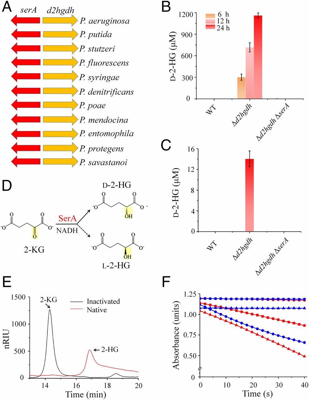 Nota Fizik Tingkatan 4 Yang Sangat Bermanfaat Coupling Between D 3 Phosphoglycerate Dehydrogenase and D 2 Of Himpunan Nota Fizik Tingkatan 4 Yang Terhebat Untuk Para Murid Download