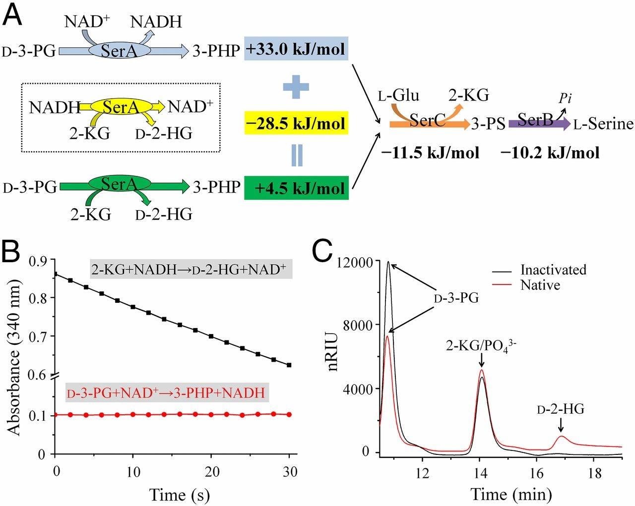 Nota Fizik Tingkatan 4 Yang Sangat Menarik Coupling Between D 3 Phosphoglycerate Dehydrogenase and D 2 Of Himpunan Nota Fizik Tingkatan 4 Yang Terhebat Untuk Para Murid Download