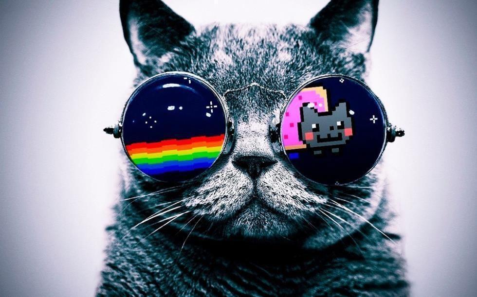 kucing jpg