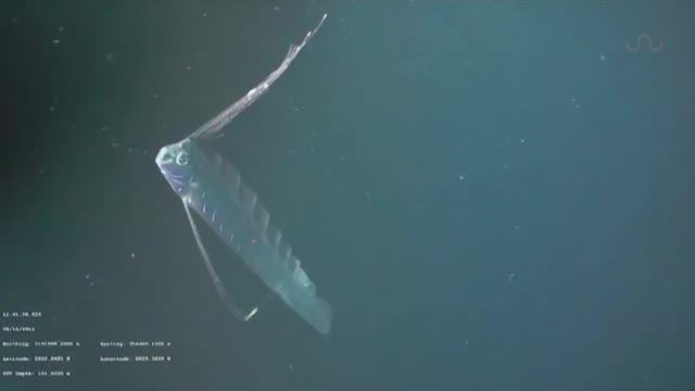 Contoh Teka Teki Ikan Paling Besar Yang Hebat Untuk Para Ibubapa