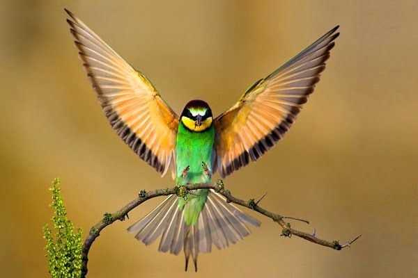 beautiful birds 1 jpg