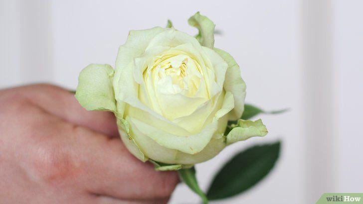 mewarnai bunga segar dengan pewarna makanan gambar berjudul dye flowers step 1