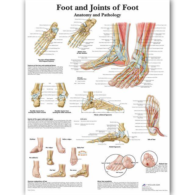 kaki sendi kaki grafik anatomi patologi poster kanvas lukisan dinding gambar pendidikan kedokteran dokter kelas