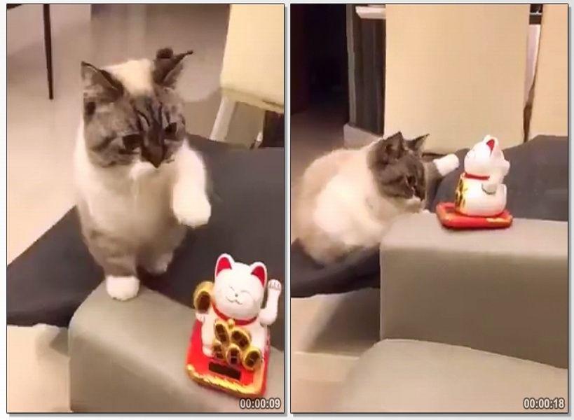 10 20180719093823 kucing jpg
