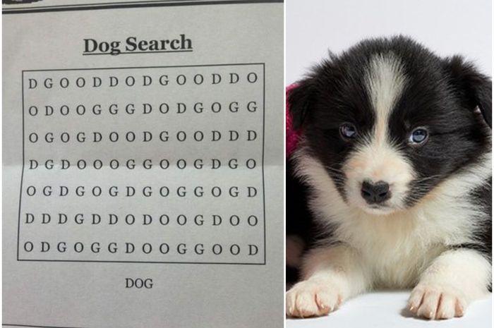 teka teki dog search