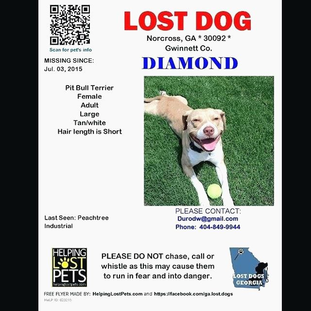lost posters the flyer flyer examples poster templates 0d wallpapers 46 found dog